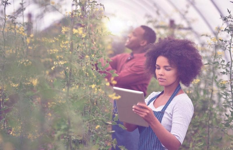 Agriculture uses big data
