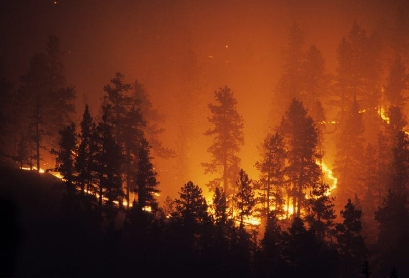 Risk Management in Insurance Wildfire